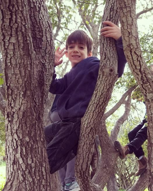 ילד מטפס על עץ בחורבת מדרס