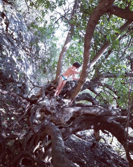 ילד על עץ, עין חרדלית