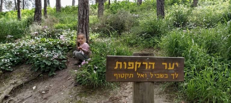 מפלי רז- יער הרקפות