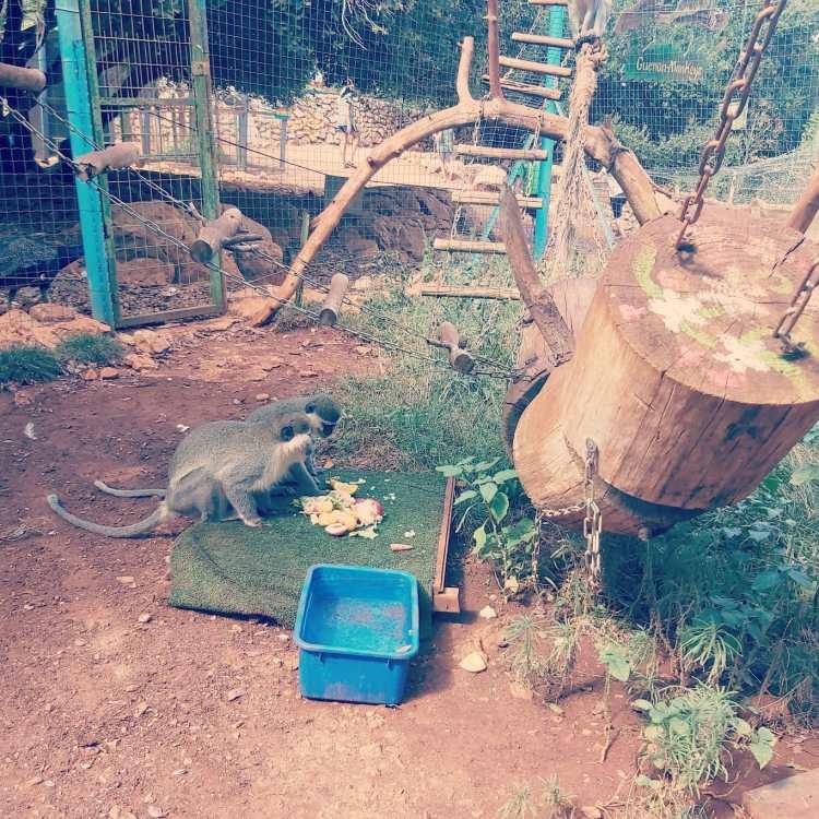 פארק הקופים יודפת