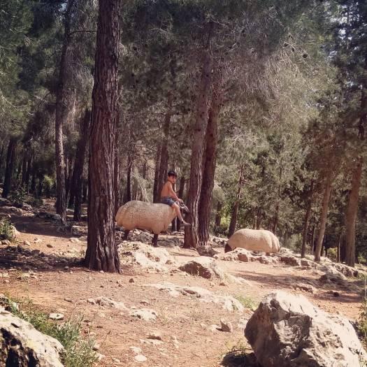 ילד מטפס על פסל כבשה, חניון הטרסה חירבת סעדים