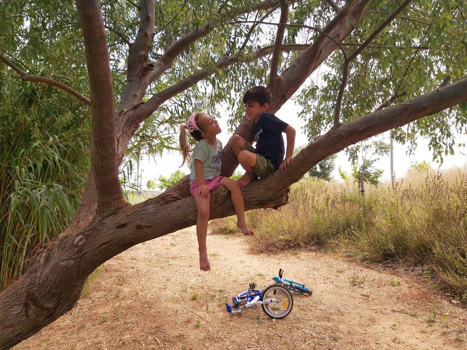שני ילדים מטפסים על עץ, פארק הוד השרון