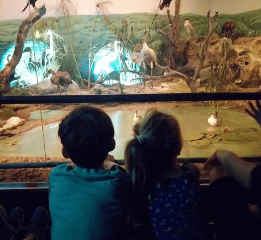 ילדים מסתכלים על מיצג- עמק החולה