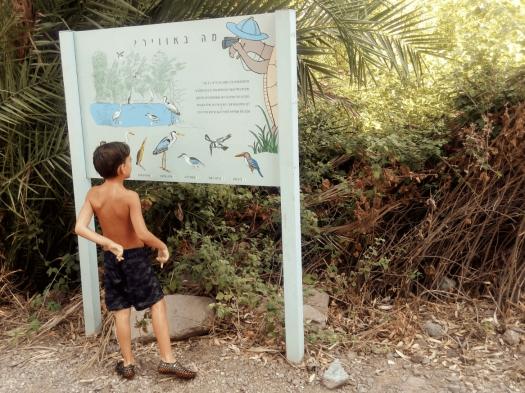 ילד מסתכל על שלט שמראה אילו ציפורים חיות באזור